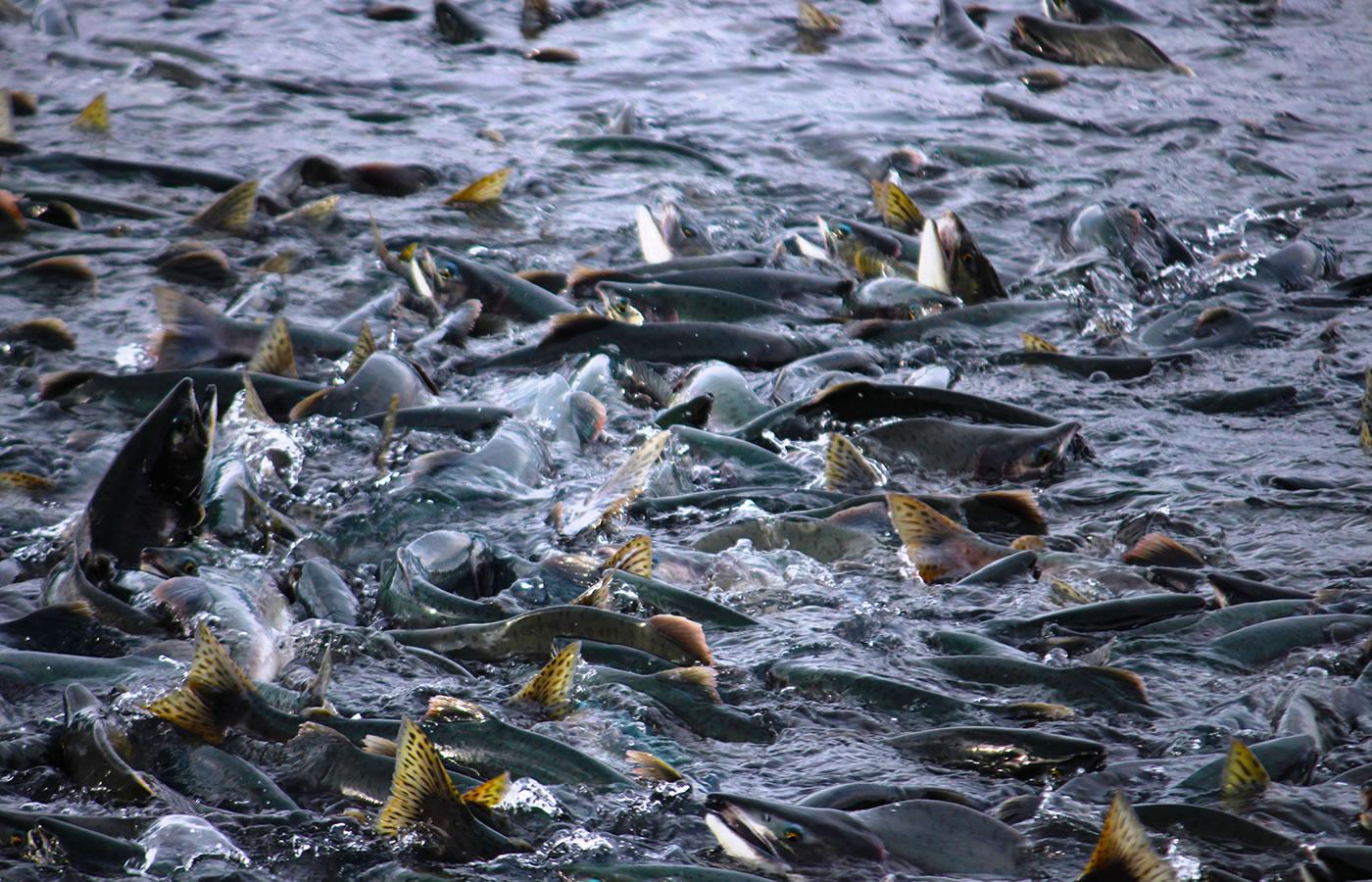 empresa-imcoex-pesca